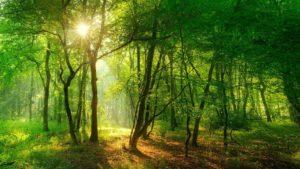Kursort Outdoor Kanga Backnang Plattenwald